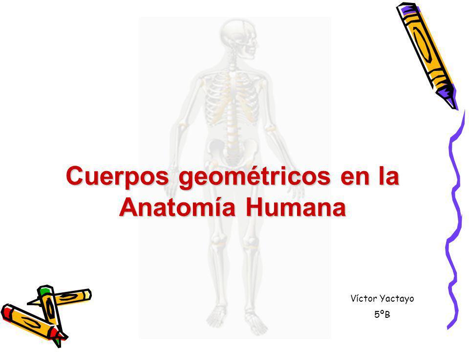 Cuerpos geométricos en la Anatomía Humana Víctor Yactayo 5ºB