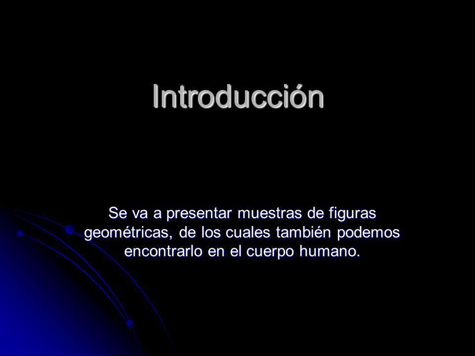 Introducción Se va a presentar muestras de figuras geométricas, de los cuales también podemos encontrarlo en el cuerpo humano.