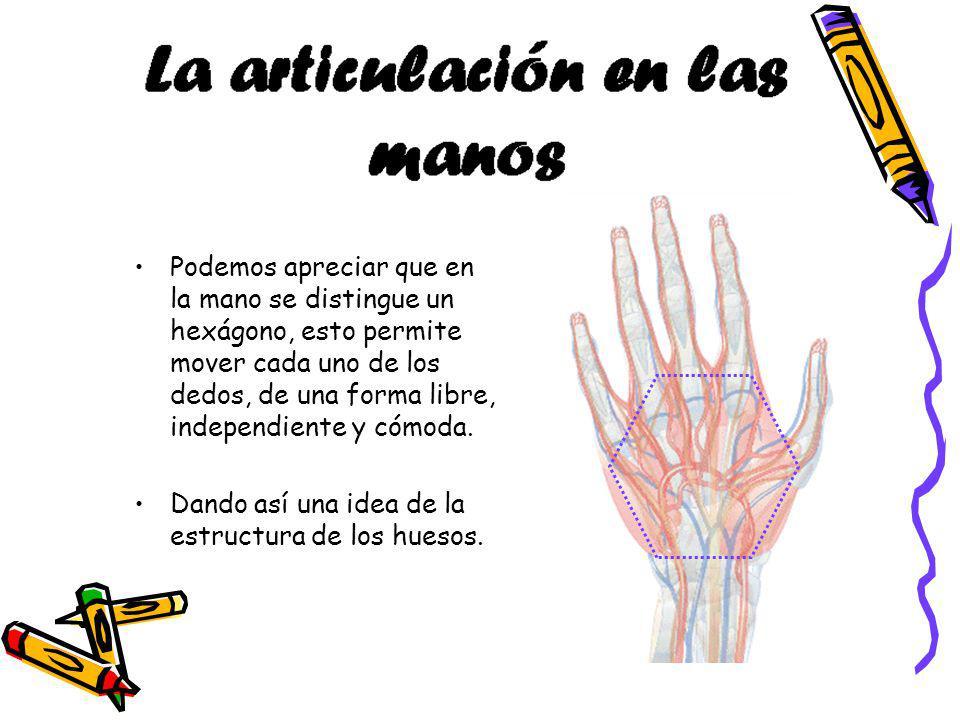 Podemos apreciar que en la mano se distingue un hexágono, esto permite mover cada uno de los dedos, de una forma libre, independiente y cómoda. Dando
