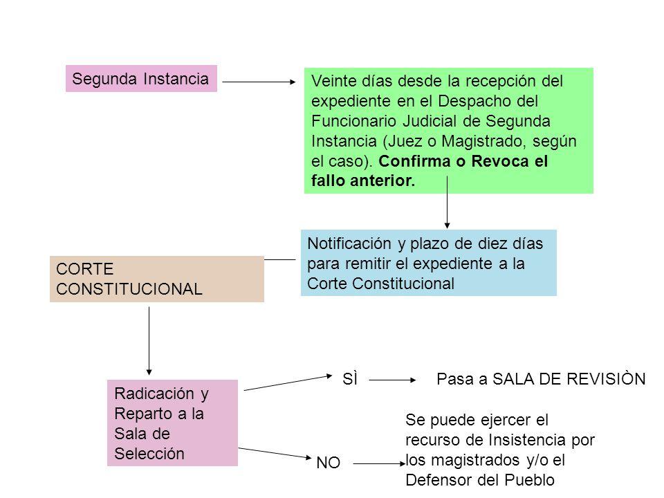 Solicitud de informes, ratificación ampliación LA ACCIÒN DE TUTELA ADMISIÒN Notificación al accionado Presentación de la solicitud por el accionante ante el Juez Competente (Reparto) Fallo de Primera Instancia.