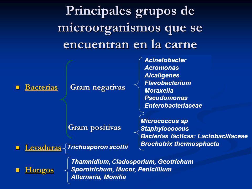 Principales grupos de microorganismos que se encuentran en la carne Bacterias Gram negativas Bacterias Gram negativas Bacterias Gram positivas Gram po
