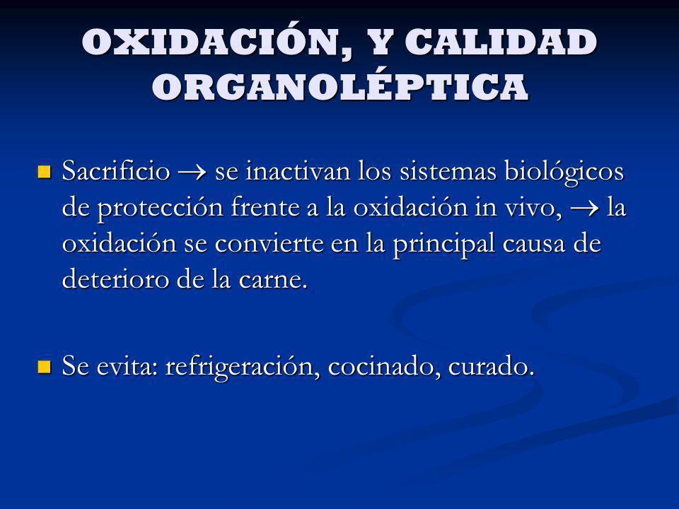 OXIDACIÓN, Y CALIDAD ORGANOLÉPTICA Sacrificio se inactivan los sistemas biológicos de protección frente a la oxidación in vivo, la oxidación se convie
