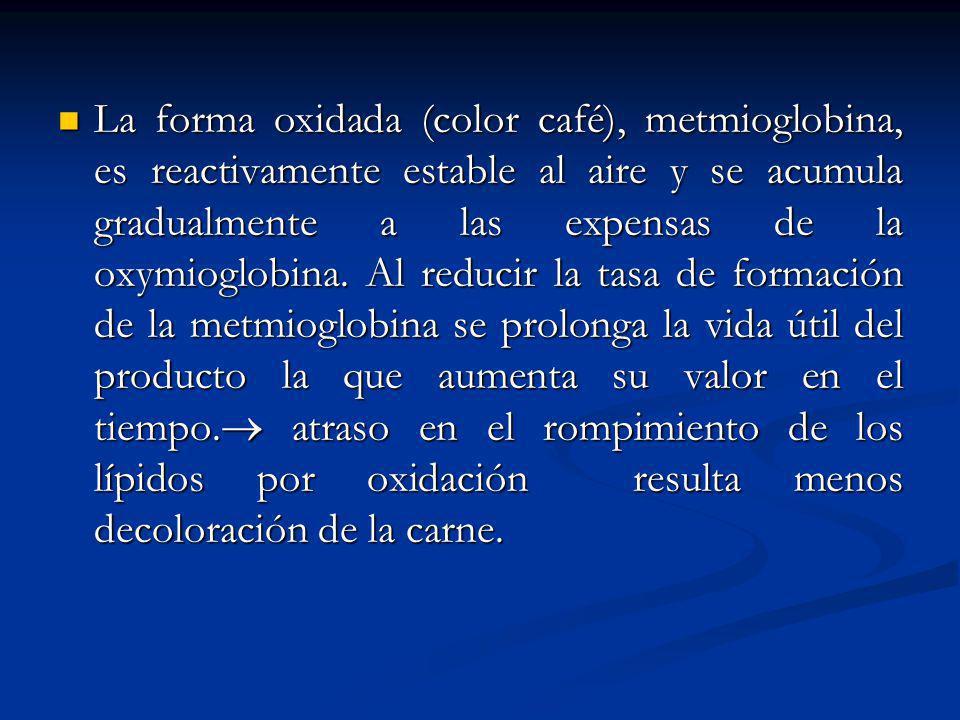 La forma oxidada (color café), metmioglobina, es reactivamente estable al aire y se acumula gradualmente a las expensas de la oxymioglobina. Al reduci
