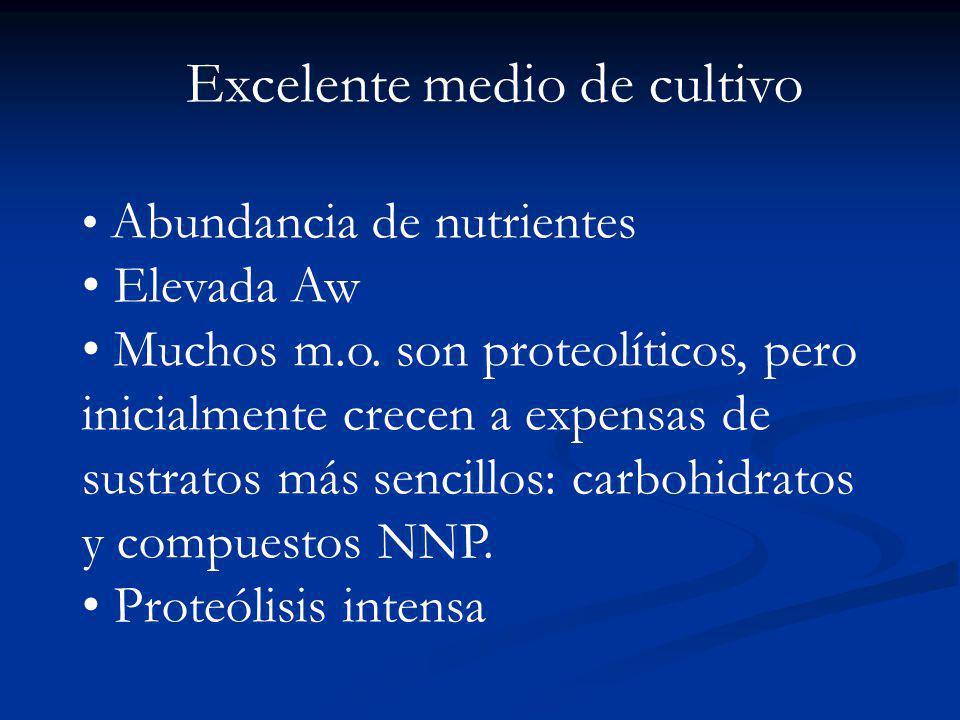Excelente medio de cultivo Abundancia de nutrientes Elevada Aw Muchos m.o. son proteolíticos, pero inicialmente crecen a expensas de sustratos más sen