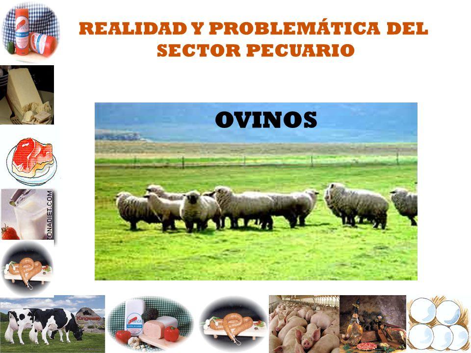 REALIDAD Y PROBLEMÁTICA DEL SECTOR PECUARIO OVINOS