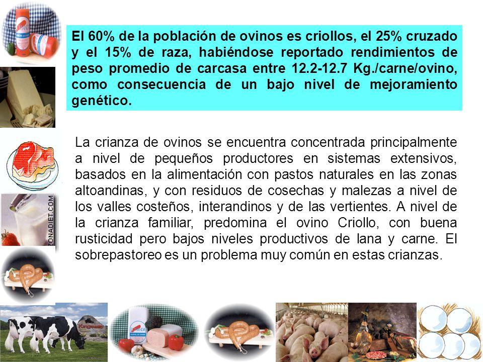 El 60% de la población de ovinos es criollos, el 25% cruzado y el 15% de raza, habiéndose reportado rendimientos de peso promedio de carcasa entre 12.