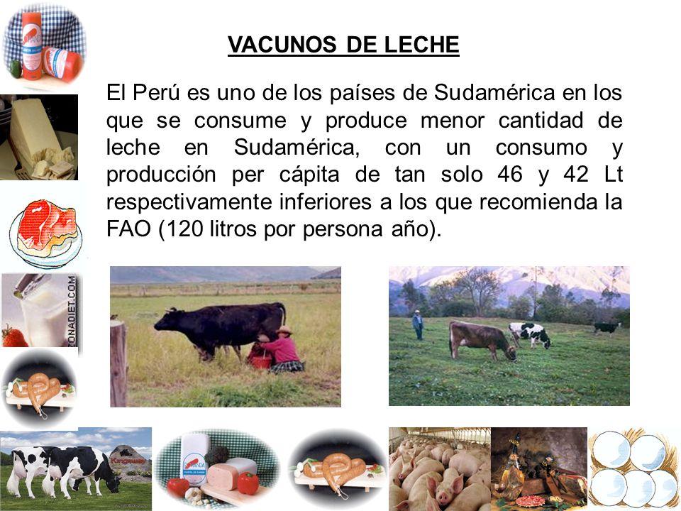 VACUNOS DE LECHE El Perú es uno de los países de Sudamérica en los que se consume y produce menor cantidad de leche en Sudamérica, con un consumo y pr