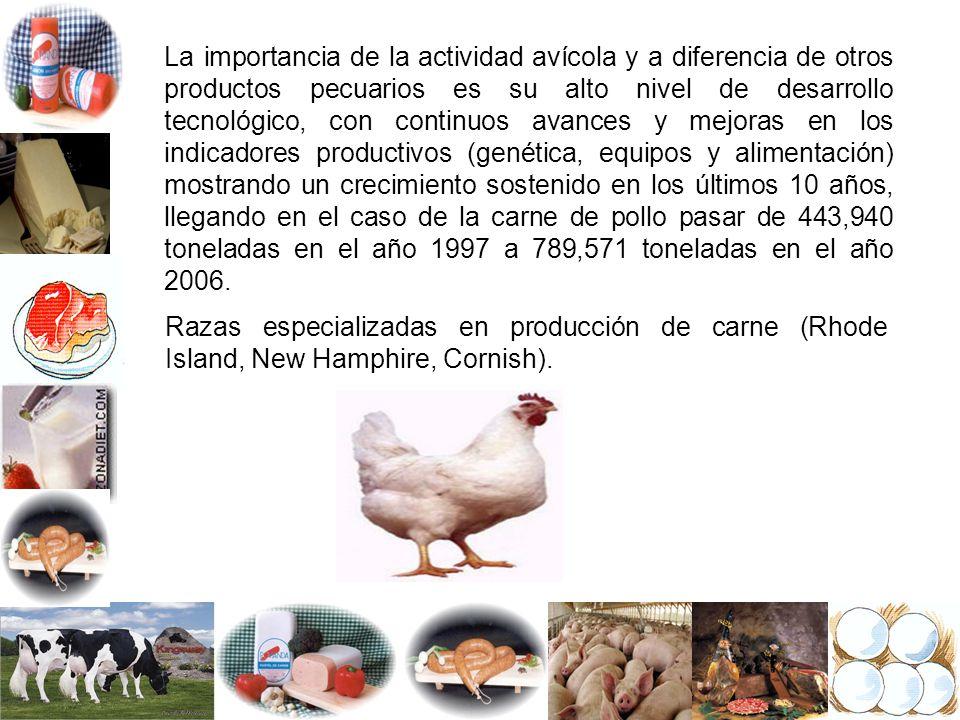 La importancia de la actividad avícola y a diferencia de otros productos pecuarios es su alto nivel de desarrollo tecnológico, con continuos avances y