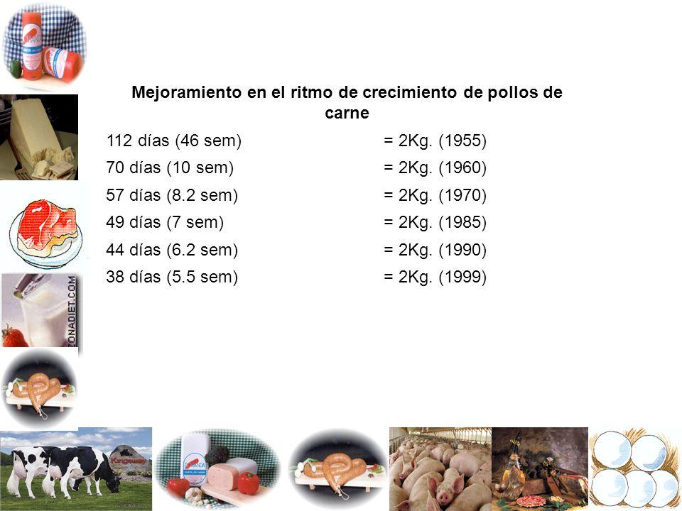 Mejoramiento en el ritmo de crecimiento de pollos de carne 112 días (46 sem)= 2Kg. (1955) 70 días (10 sem)= 2Kg. (1960) 57 días (8.2 sem)= 2Kg. (1970)