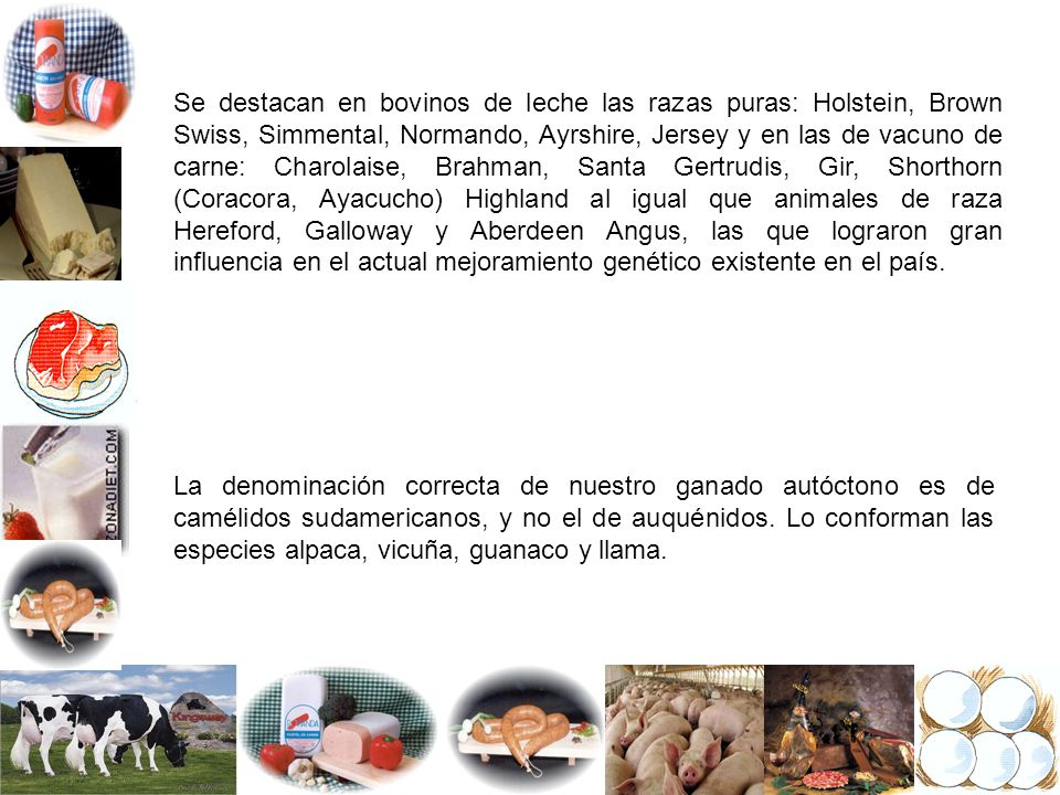 OVINOS VACUNOS PORCINOS AVES Producciones de leche, carnes, lanas, fibras y productos avícolas.