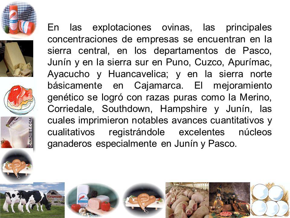 En las explotaciones ovinas, las principales concentraciones de empresas se encuentran en la sierra central, en los departamentos de Pasco, Junín y en