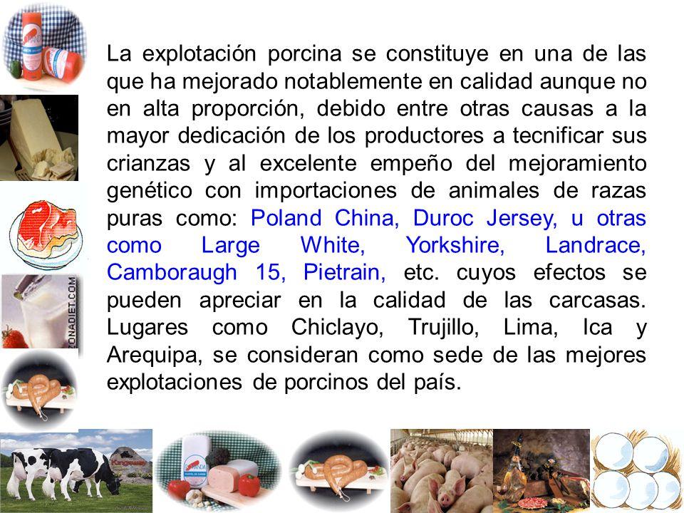 VACUNOS DE CARNE Y DOBLE PROPOSITO CAPRINOS AVES (incluye: pollos, codornices y avestruz) CAMELIDOS SUDAMERICANOS (alpaca, llama, guanaco, vicuña) CUYES Y CONEJOS CARNE DE CARACOL (Hélix aspersa) TRABAJO DE INVESTIGACION GRUPAL