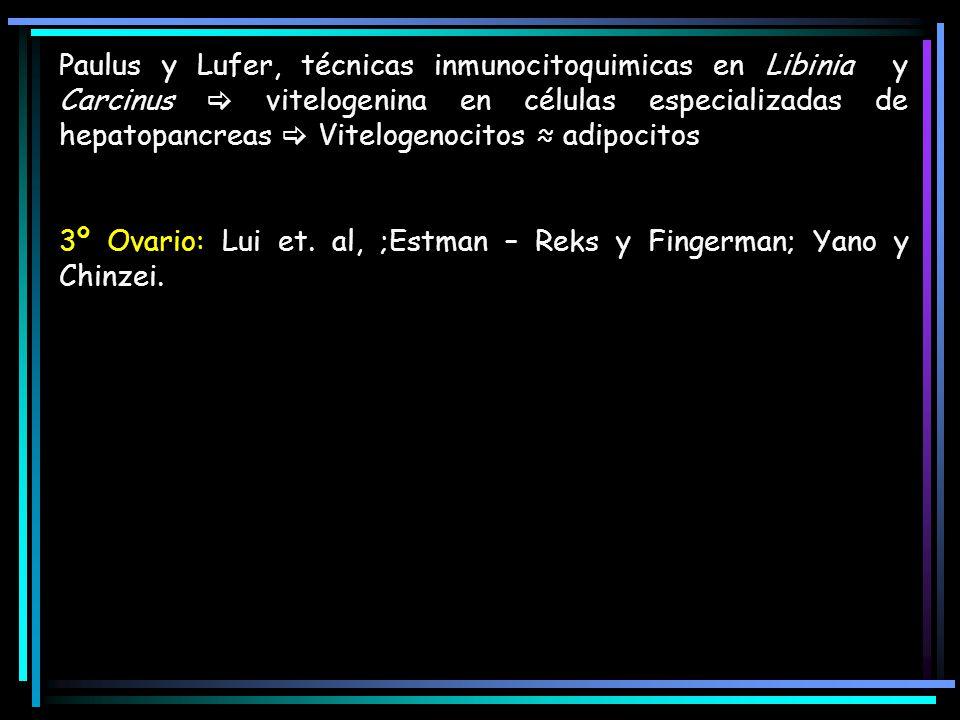 Paulus y Lufer, técnicas inmunocitoquimicas en Libinia y Carcinus vitelogenina en células especializadas de hepatopancreas Vitelogenocitos adipocitos 3º Ovario: Lui et.