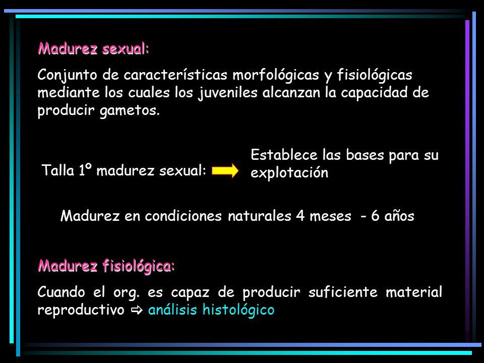 Madurez sexual: Conjunto de características morfológicas y fisiológicas mediante los cuales los juveniles alcanzan la capacidad de producir gametos. T