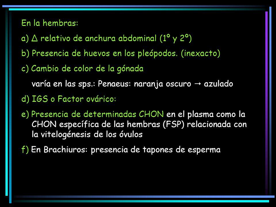 En la hembras: a) Δ relativo de anchura abdominal (1º y 2º) b) Presencia de huevos en los pleópodos. (inexacto) c) Cambio de color de la gónada varía
