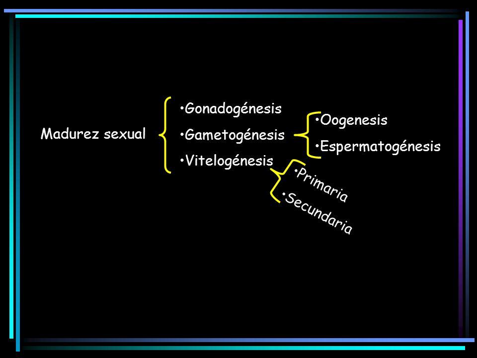 Madurez sexual Gonadogénesis Gametogénesis Vitelogénesis Oogenesis Espermatogénesis Primaria Secundaria