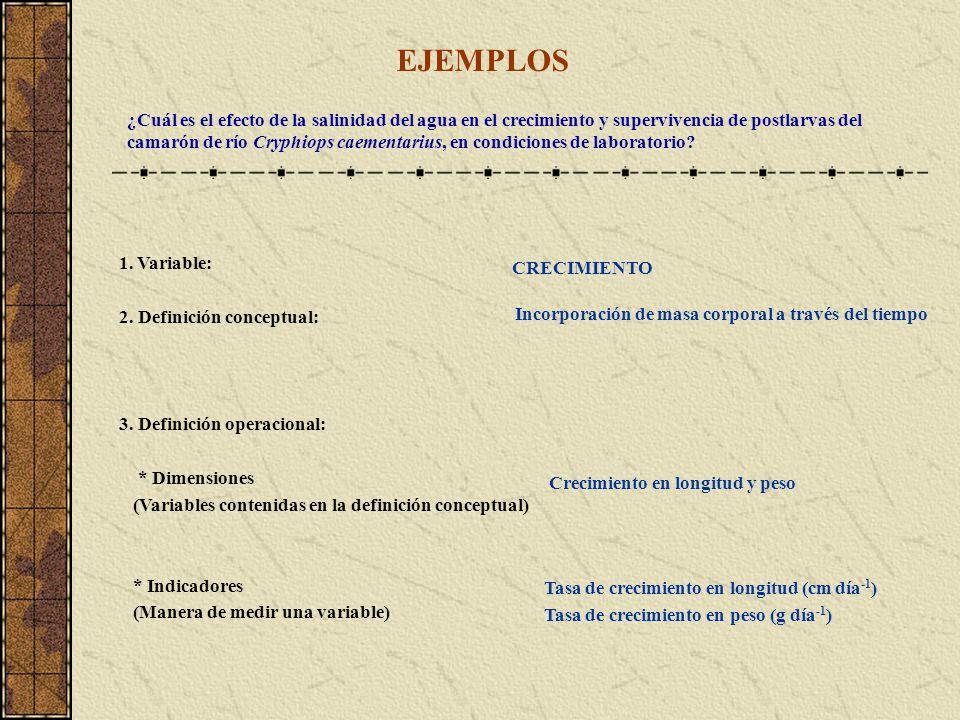 TIPOS BÁSICOS DE FUENTES DE INFORMACIÓN Fuentes primarias (directas), que constituyen el objetivo de la búsqueda bibliográfica.