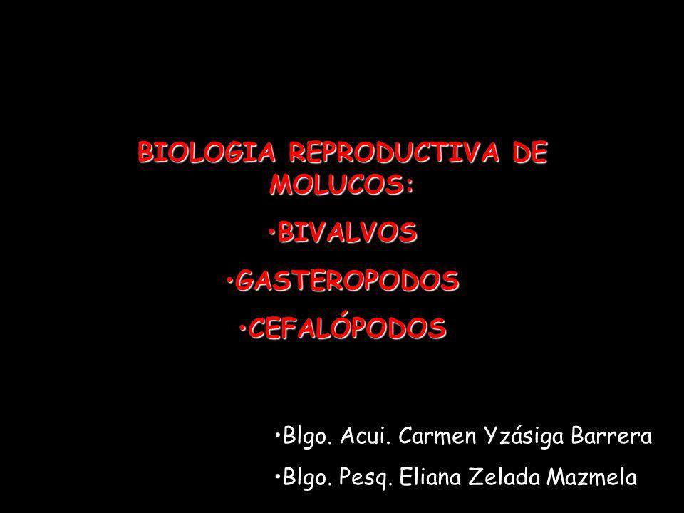 BIOLOGIA REPRODUCTIVA DE MOLUCOS: BIVALVOSBIVALVOS GASTEROPODOSGASTEROPODOS CEFALÓPODOSCEFALÓPODOS Blgo. Acui. Carmen Yzásiga Barrera Blgo. Pesq. Elia