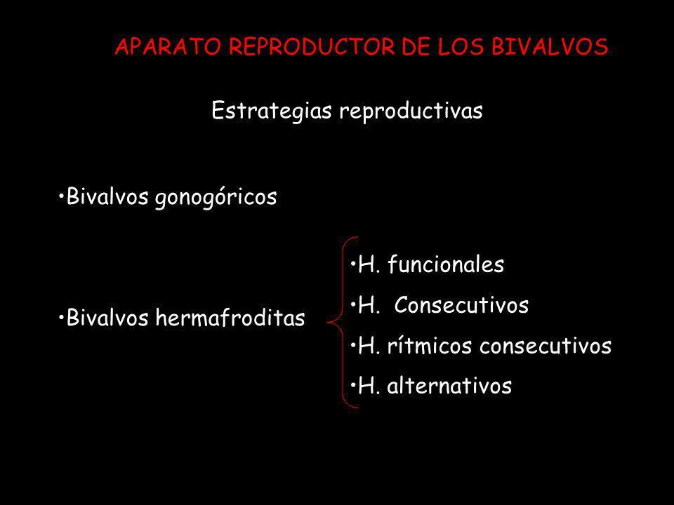 APARATO REPRODUCTOR DE LOS BIVALVOS Bivalvos gonogóricos Bivalvos hermafroditas H. funcionales H. Consecutivos H. rítmicos consecutivos H. alternativo