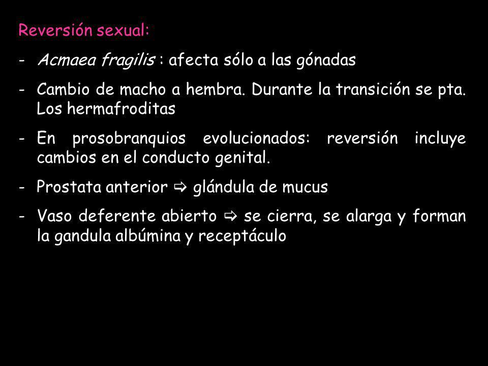 Reversión sexual: -Acmaea fragilis : afecta sólo a las gónadas -Cambio de macho a hembra. Durante la transición se pta. Los hermafroditas -En prosobra