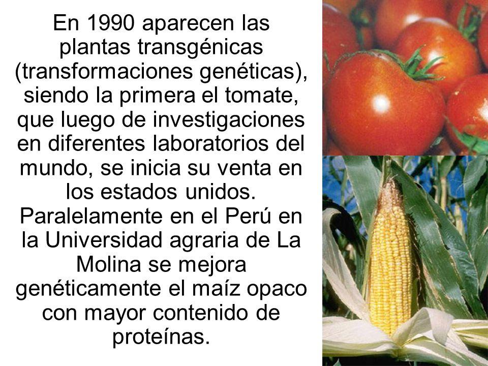 En 1990 aparecen las plantas transgénicas (transformaciones genéticas), siendo la primera el tomate, que luego de investigaciones en diferentes labora