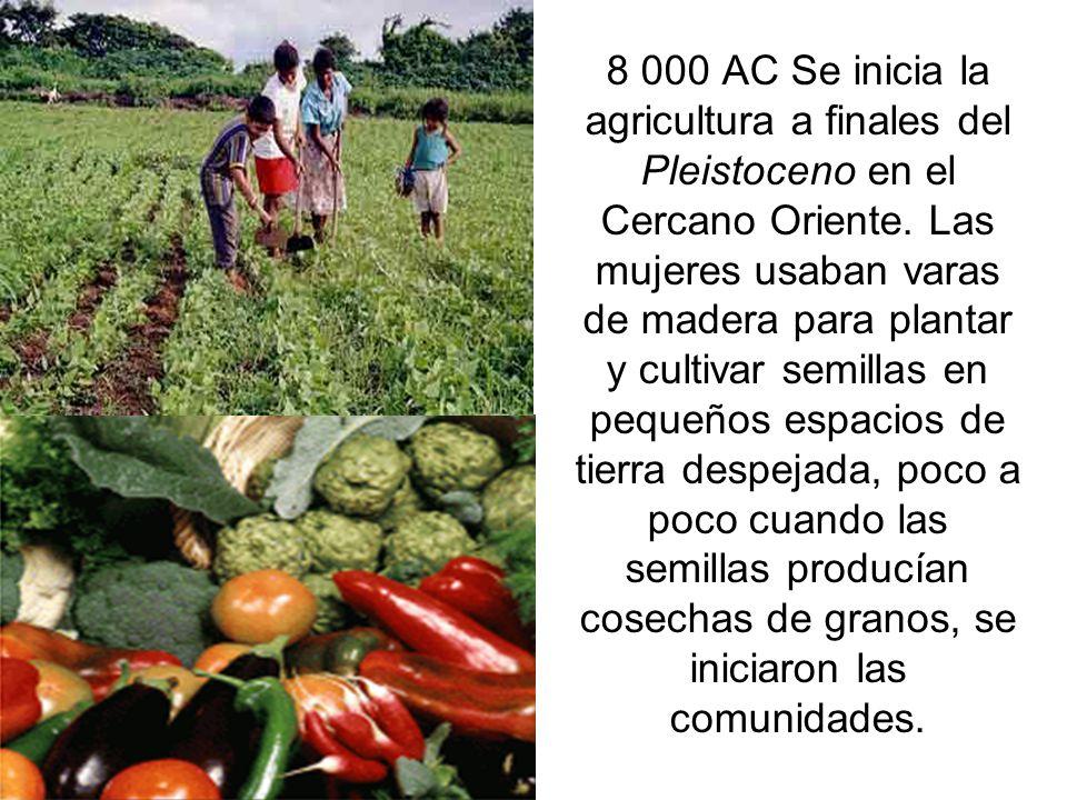 8 000 AC Se inicia la agricultura a finales del Pleistoceno en el Cercano Oriente.