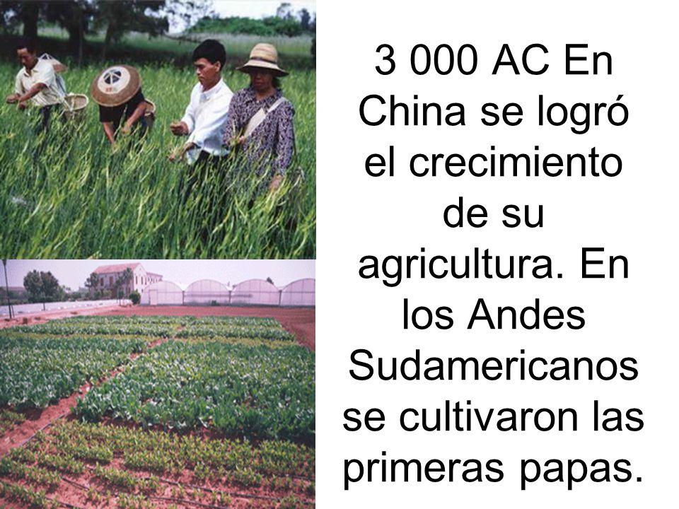 3 000 AC En China se logró el crecimiento de su agricultura.