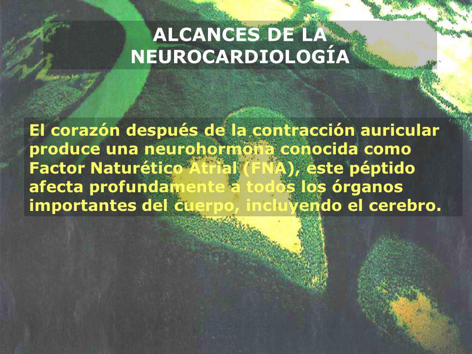 El corazón después de la contracción auricular produce una neurohormona conocida como Factor Naturético Atrial (FNA), este péptido afecta profundament