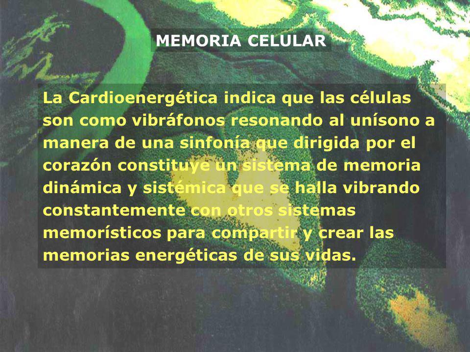 MEMORIA CELULAR La Cardioenergética indica que las células son como vibráfonos resonando al unísono a manera de una sinfonía que dirigida por el coraz