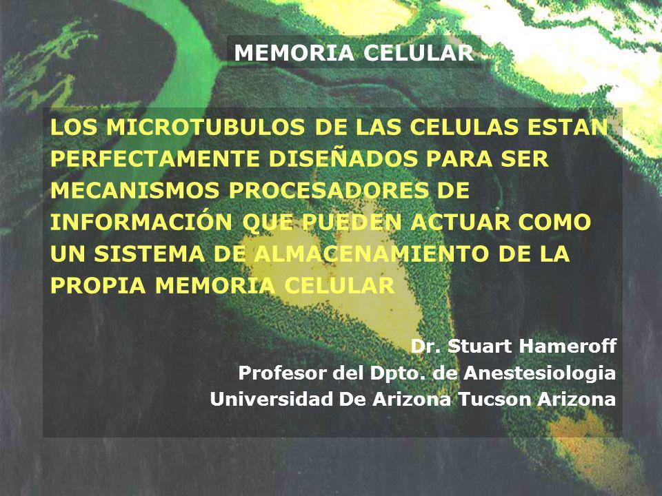MEMORIA CELULAR LOS MICROTUBULOS DE LAS CELULAS ESTAN PERFECTAMENTE DISEÑADOS PARA SER MECANISMOS PROCESADORES DE INFORMACIÓN QUE PUEDEN ACTUAR COMO U