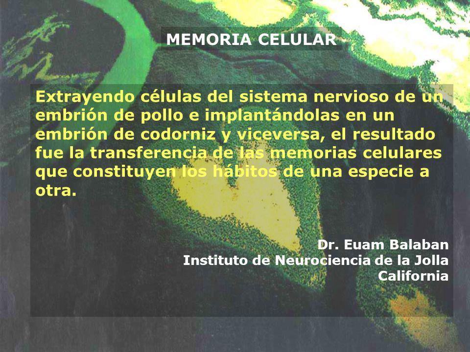 MEMORIA CELULAR Extrayendo células del sistema nervioso de un embrión de pollo e implantándolas en un embrión de codorniz y viceversa, el resultado fu