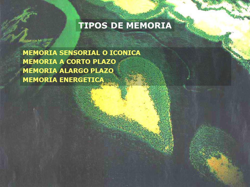 TIPOS DE MEMORIA MEMORIA SENSORIAL O ICONICA MEMORIA A CORTO PLAZO MEMORIA ALARGO PLAZO MEMORIA ENERGETICA