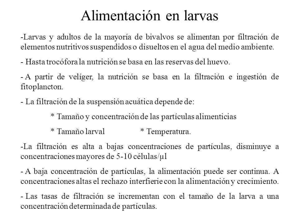 Alimentación en larvas -Larvas y adultos de la mayoría de bivalvos se alimentan por filtración de elementos nutritivos suspendidos o disueltos en el agua del medio ambiente.