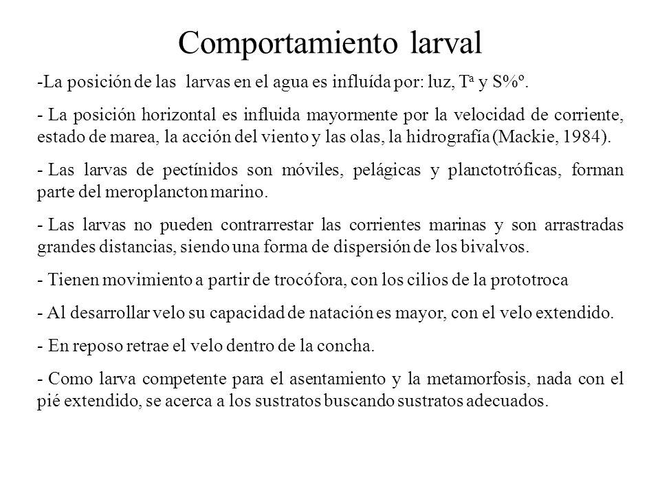 Comportamiento larval -La posición de las larvas en el agua es influída por: luz, T a y S%º.