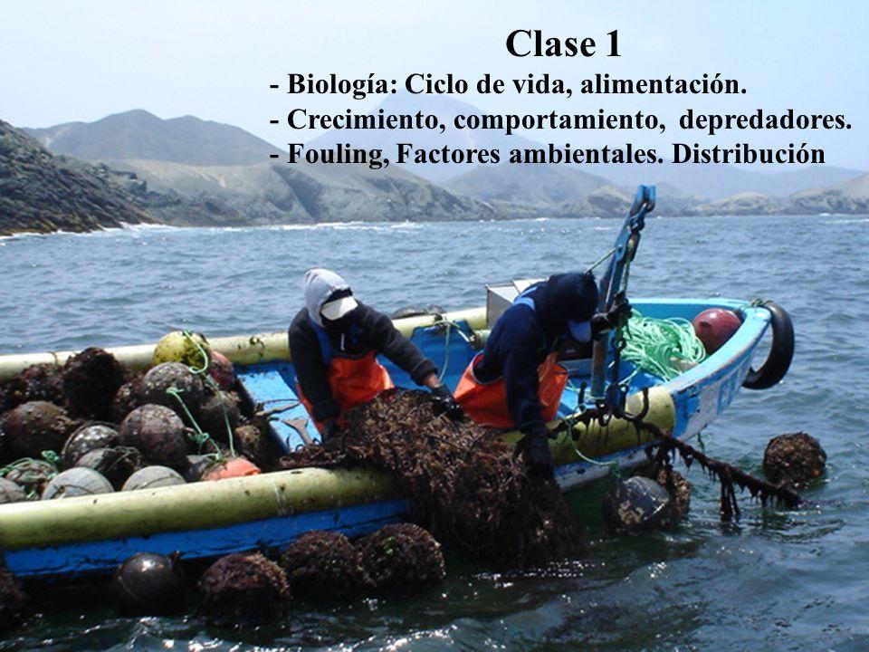 Clase 1 - Biología: Ciclo de vida, alimentación.- Crecimiento, comportamiento, depredadores.