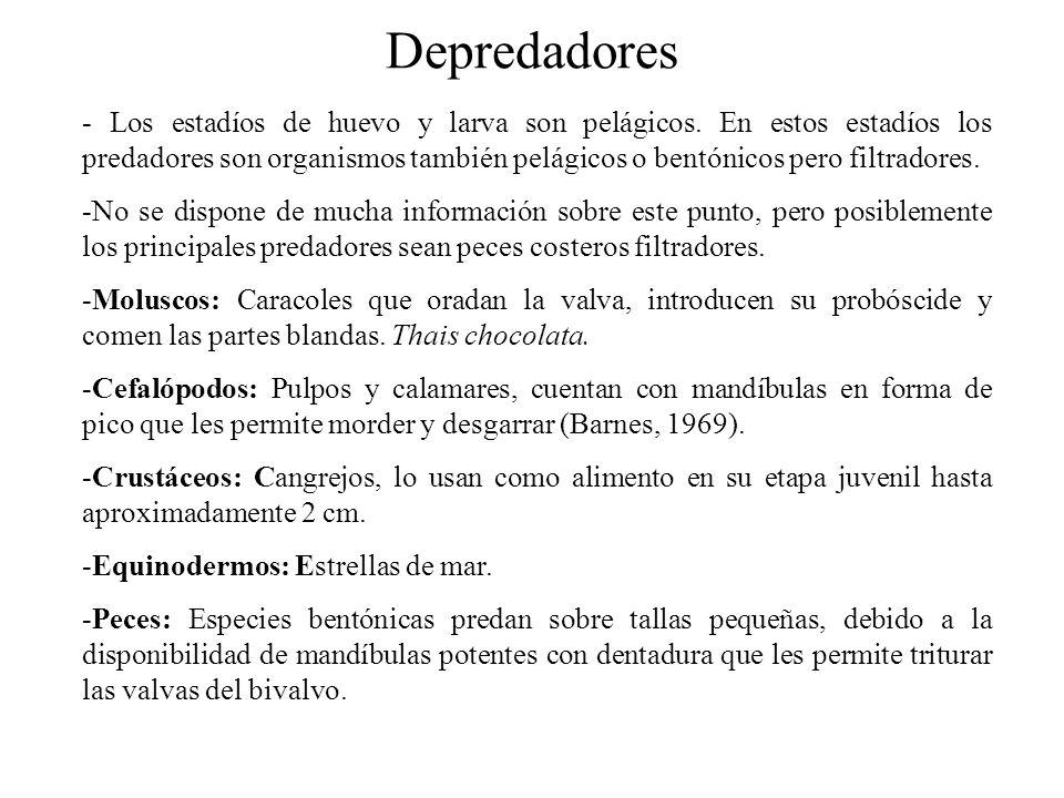 Depredadores - Los estadíos de huevo y larva son pelágicos.