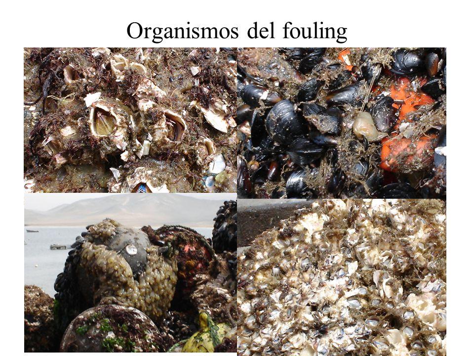 Organismos del fouling