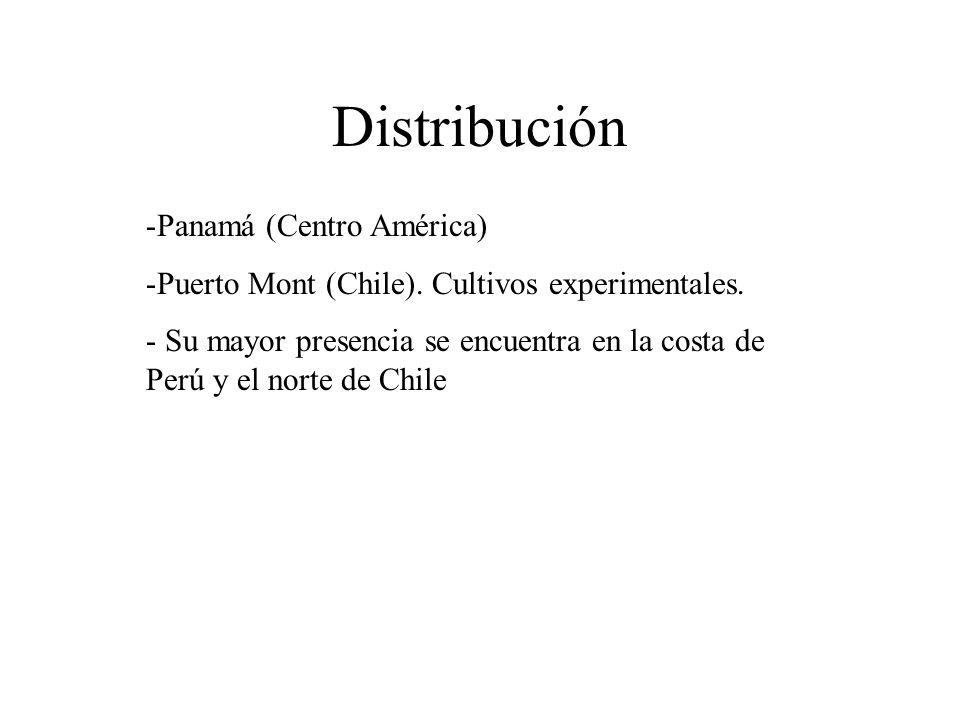 Distribución -Panamá (Centro América) -Puerto Mont (Chile).