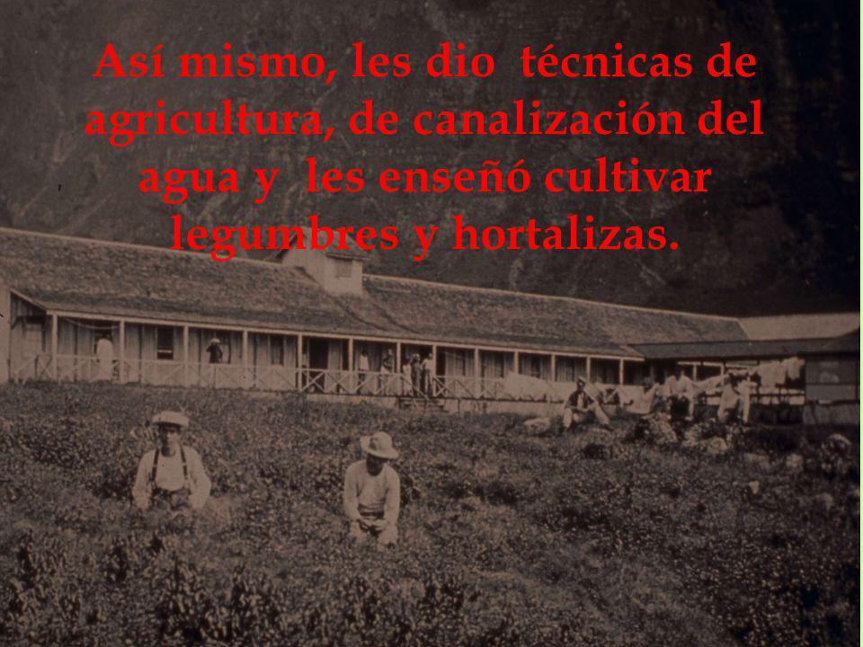 Así mismo, les dio técnicas de agricultura, de canalización del agua y les enseñó cultivar legumbres y hortalizas.
