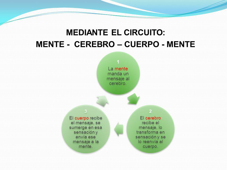 MEDIANTE EL CIRCUITO: MENTE - CEREBRO – CUERPO - MENTE 1 La mente manda un mensaje al cerebro. 2 El cerebro recibe el mensaje, lo transforma en sensac