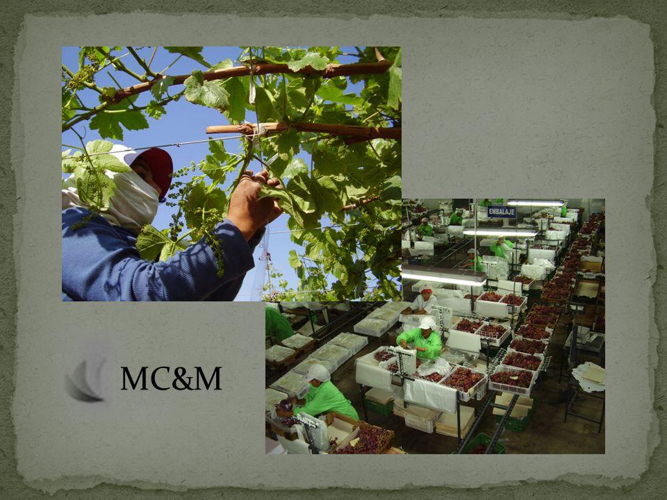 10 contenedores de páprika de mesa a México 10 contenedores de páprika de prensa a España 10 contenedores de ajo a México 20 contenedores de uva a diversos destinos 100 contenedores de cebolla dulce a España 400 contenedores de cebolla dulce a EE.UU.