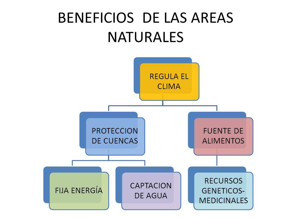 BENEFICIOS DE LAS AREAS NATURALES REGULA EL CLIMA PROTECCION DE CUENCAS FIJA ENERGÍA CAPTACION DE AGUA FUENTE DE ALIMENTOS RECURSOS GENETICOS- MEDICIN