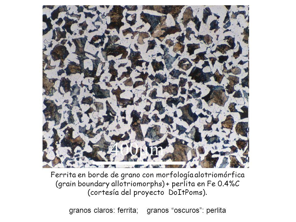 Ferrita en borde de grano con morfología alotriomórfica (grain boundary allotriomorphs) + perlita en Fe 0.4%C (cortesía del proyecto DoItPoms). granos
