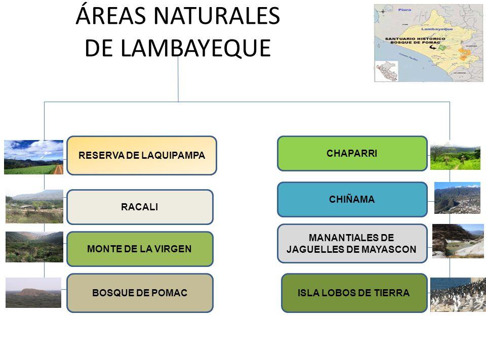 ÁREAS NATURALES DE LAMBAYEQUE RESERVA DE LAQUIPAMPA RACALI MONTE DE LA VIRGEN BOSQUE DE POMAC CHAPARRI CHIÑAMA MANANTIALES DE JAGUELLES DE MAYASCON IS
