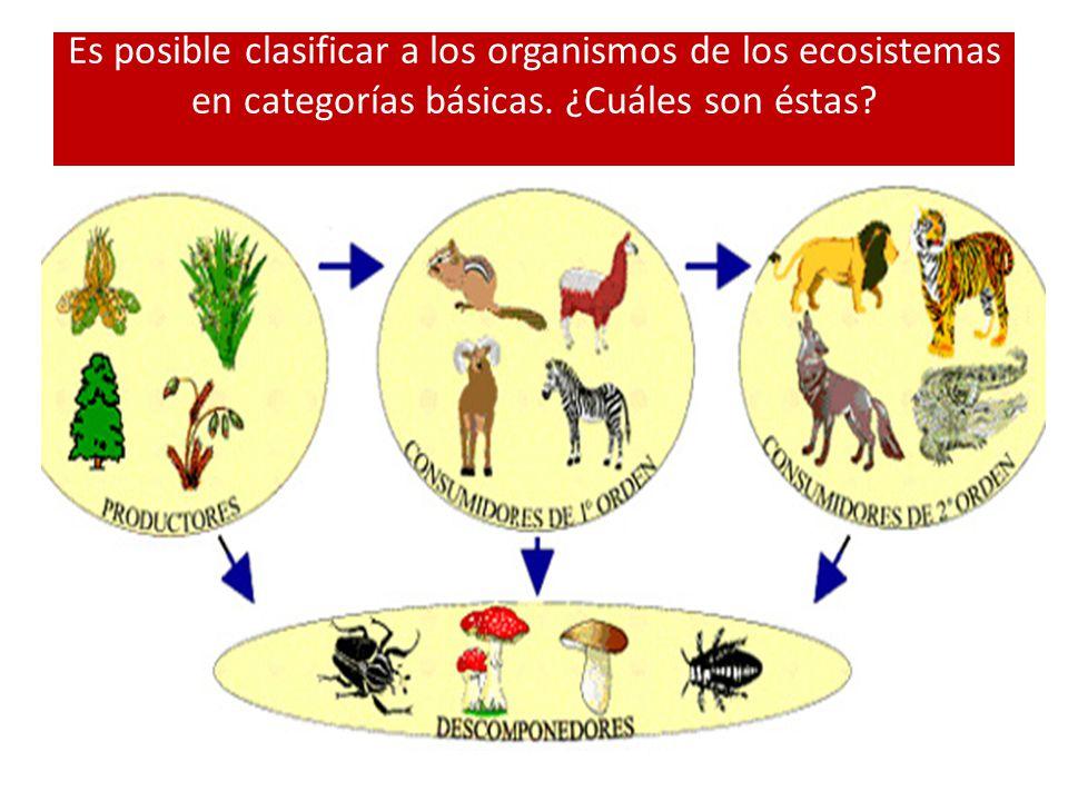 Es posible clasificar a los organismos de los ecosistemas en categorías básicas. ¿Cuáles son éstas?