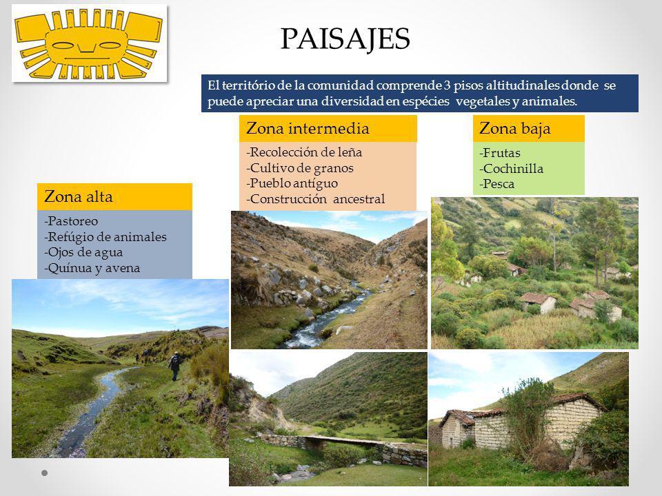 PAISAJES Zona alta -Pastoreo -Refúgio de animales -Ojos de agua -Quínua y avena Zona intermedia -Recolección de leña -Cultivo de granos -Pueblo antígu