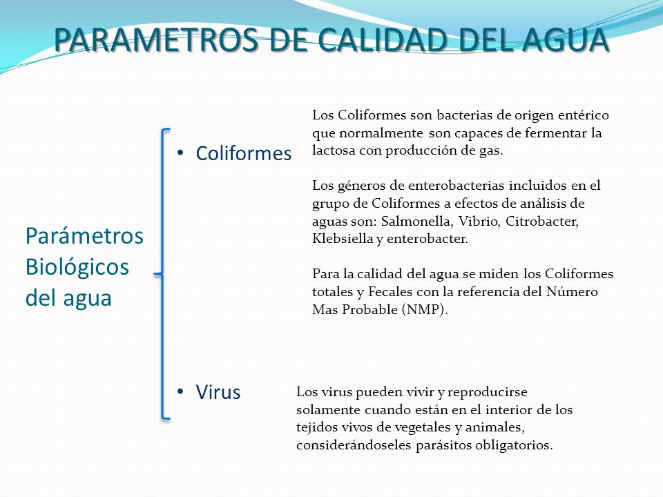 PARAMETROS DE CALIDAD DEL AGUA Parámetros Biológicos del agua Coliformes Virus Los Coliformes son bacterias de origen entérico que normalmente son cap
