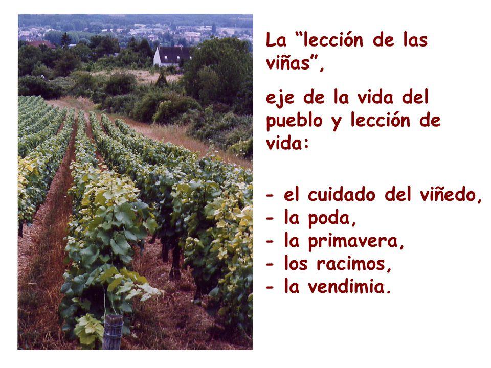 La lección de las viñas, eje de la vida del pueblo y lección de vida: - el cuidado del viñedo, - la poda, - la primavera, - los racimos, - la vendimia.