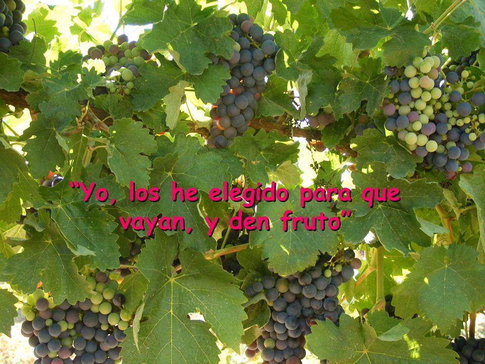 Yo, los he elegido para que vayan, y den fruto