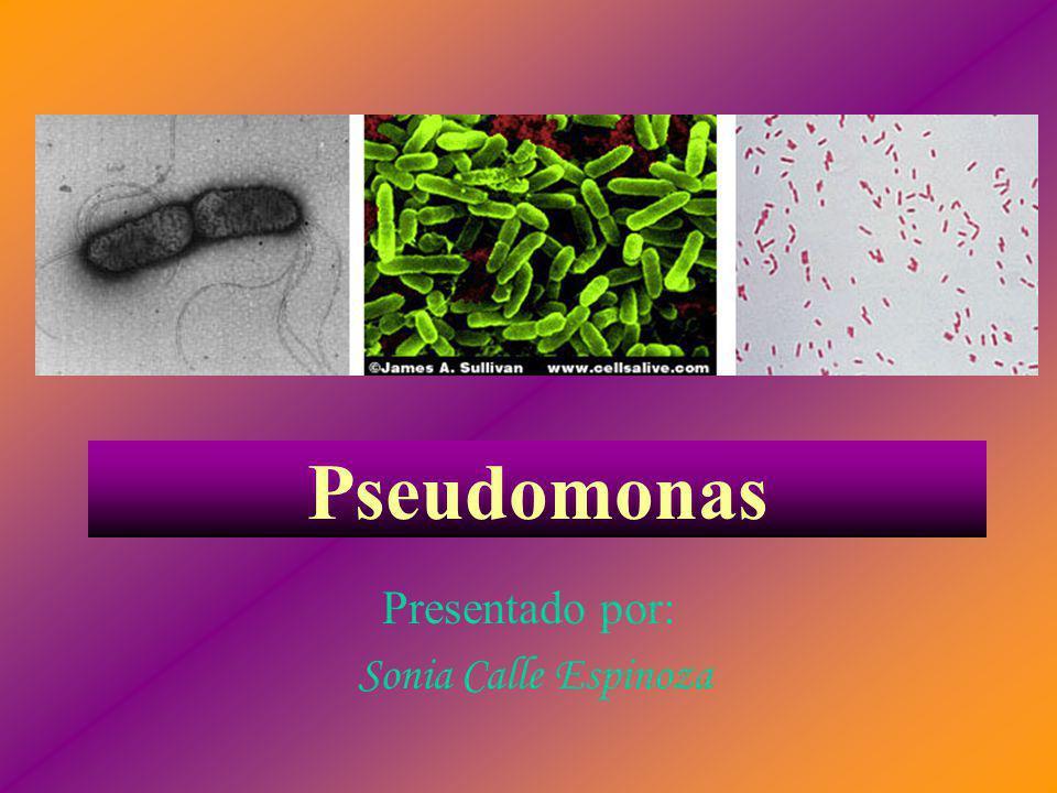Pseudomonas Presentado por: Sonia Calle Espinoza